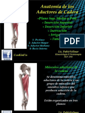 que son los musculos aductores de la cadera