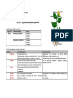 u1 l6 Organismul Plantelor Superioare