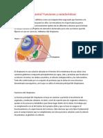 Citoplasma y Citosol