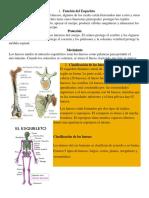 Función del Esqueleto.docx