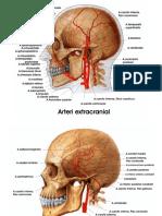 Vascularisasi otak