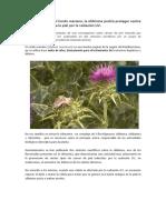Cardo mariano.pdf