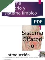 SISTEMA OLFATORIO Y LÍMBICO verídico