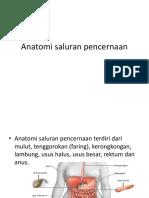 Anatomi saluran pencernaan.pptx