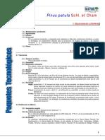975Pinus patula.pdf