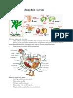 Organ Tumbuhan Dan Hewan