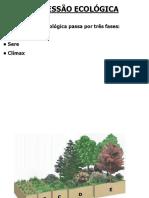 1series_sucessao_ecologica.pdf