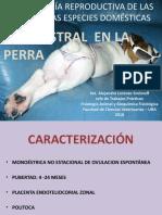 Canino y Felino