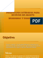 Presentacion Bovinos de Carne