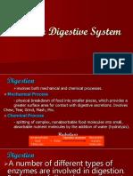 Human Digestive System Final