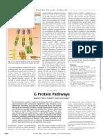 G Proteins Pathways