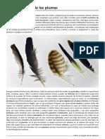 Origen Plumas.pdf