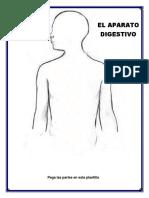 aparato digestivo lamina