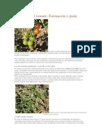 El Cultivo Del Tomate Formación y Poda