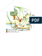 ciclo do azoto.docx