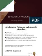 Anatomía y Fisiología Del Sistema Digestivo