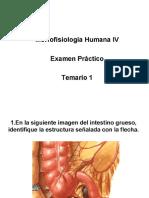 Examen Practico - Morfo IV