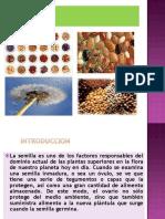 Presentacion de Semillas.ppt
