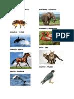 Animales en Español e Ingles