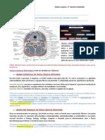 Genetics a Conceptual Approach Pierce b A