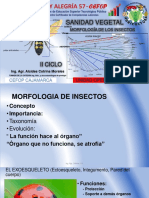 morfologia de los insectos.pdf