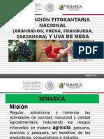 01_REGULACION_FITOSANITARIA_NACIONAL_FRUTILLAS.pptx