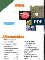 liliopsida