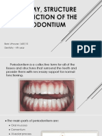 Anatomy Structure and Function of the Periodontium
