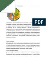 Función de los alimentos.docx
