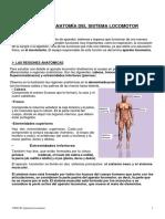 Tema 3. Anatomía Del Sistema Locomotor