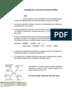 14.  Glucólisis, gluconeogénesis y ruta de las pentosas fosfato