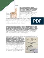 Bursitis de Cadera Ejercicios