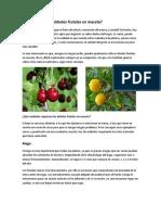 Se pueden tener árboles frutales en maceta.docx