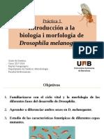 Morfologia de Drosophila2018!3!2D13!48!41