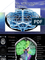 Sistema Nervioso Central y Periferico