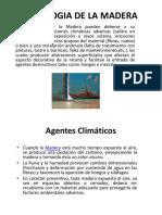 DIPOSITIVAS PATOLOGIA DE LA MADERA