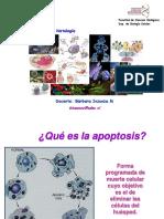 Clase Apoptosis