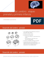 Desarrollo del cerebro.pptx