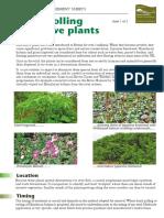 Controlling invasive plants