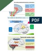Neurotoe Cn