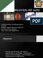 Micorrizas.pdf