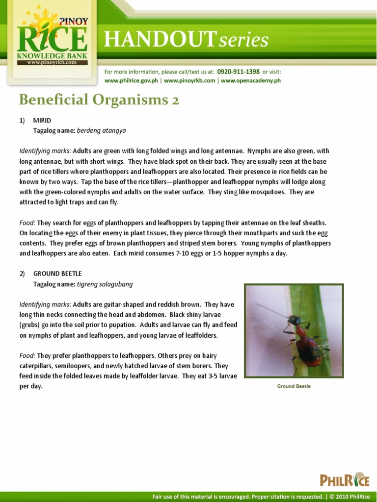 Beneficial Organisms 2 | Beetle | Fly