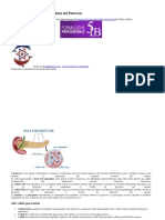 Cellule Alfa e Beta di Langerhans nel Pancreas.docx