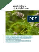 Origen, Características y Cuidados de La Hierbabuena