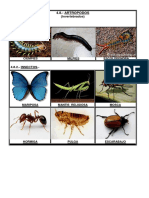 miriapodos insectos