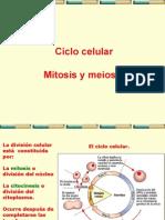 ciclo_celular