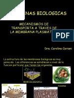 MEMBRANA BIOLOGICAS.ppt
