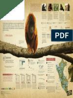Infografía Tráfico Ilegal de Primates en Perú [PDF Online]