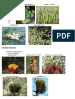 5 Plantas Acuaticas, 5 Parasitas y 5 Terrestres
