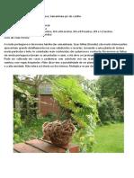 Plantas descritor